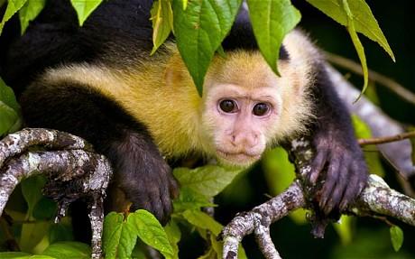 South American monkeys
