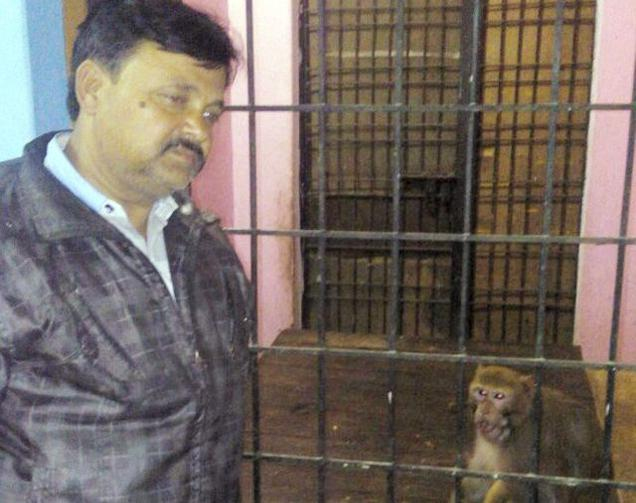 Pet Monkey In Rae Bareli Will Soon Become A Millionaire!