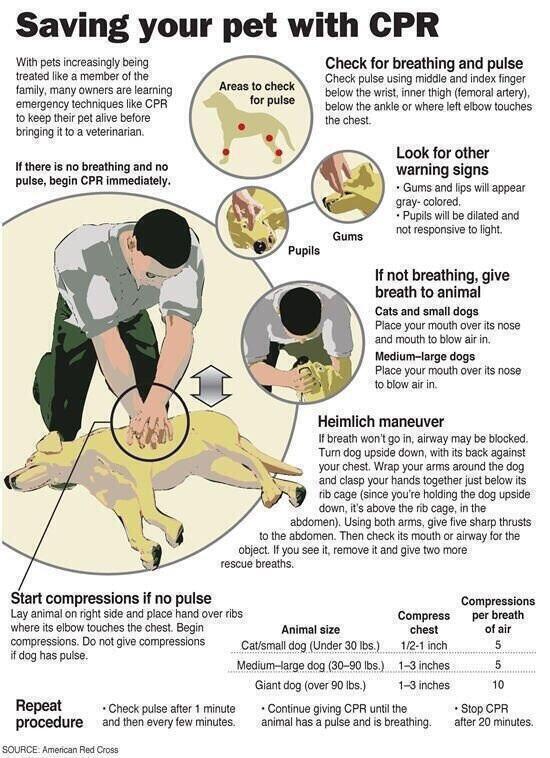 Pet CPR