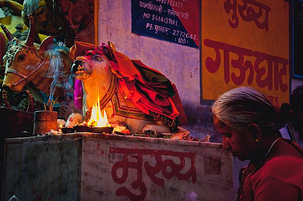 hindu cow worship