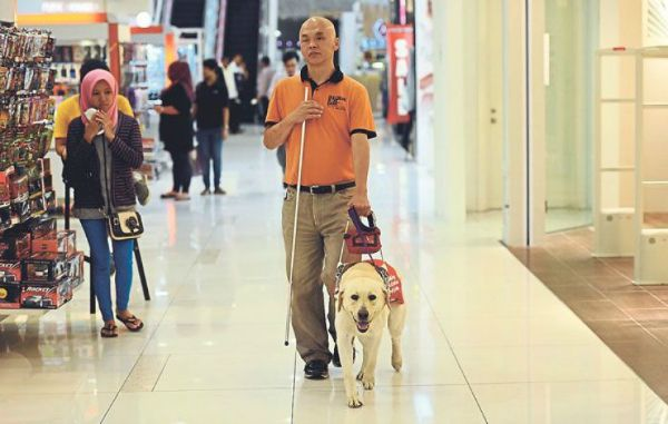Visual Assistance Dogs