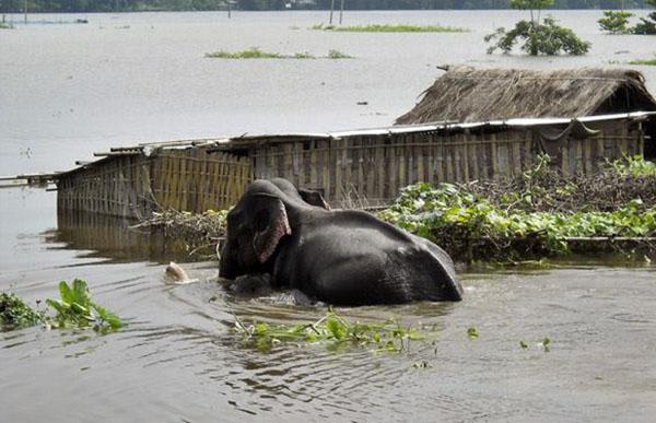 Assam floods 2015