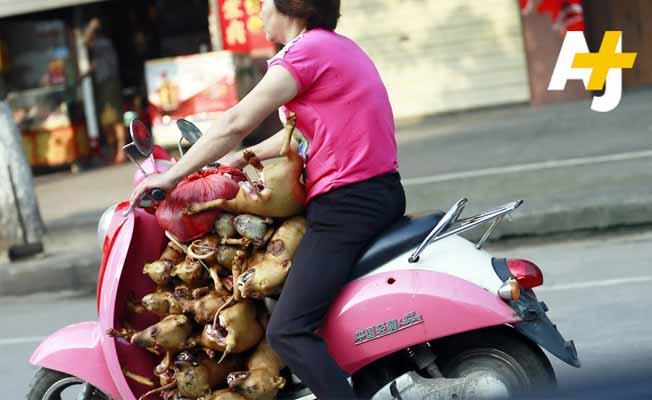 dog china festival