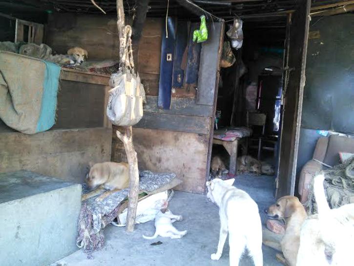 Dogs inside amma's house