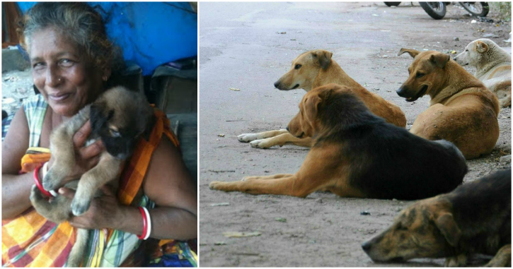 During The Day She's Just Another Ragpicker. By Night She Is Mother To 400 Of Delhi's Strays
