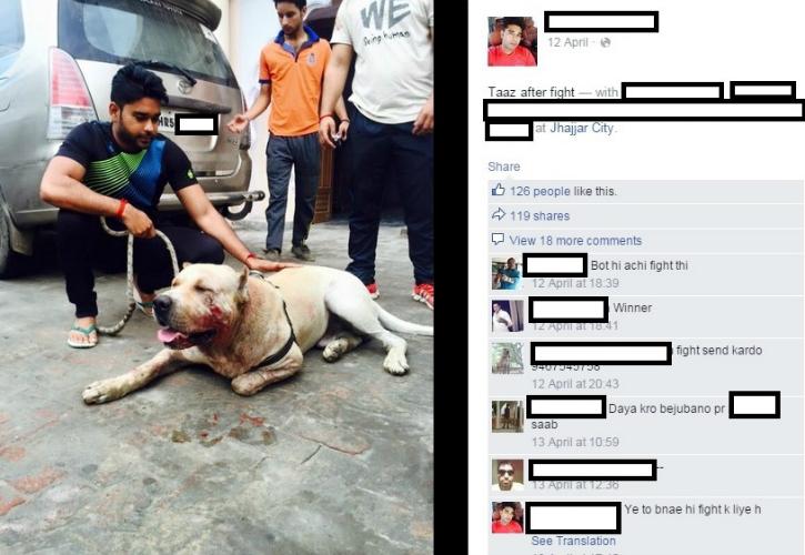 dog-abuse-dog-fight-jhajjar
