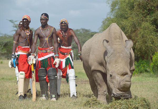 Maasai rhino