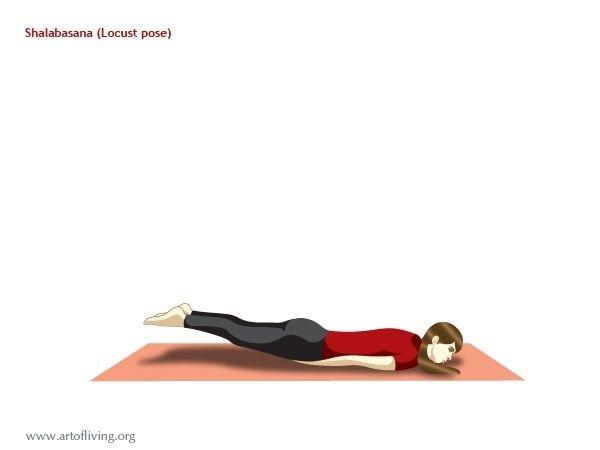 Yoga Poses: The Locust Pose (Shalabhasana)
