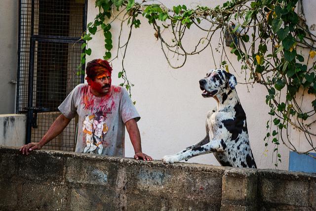 Man and dog at holi