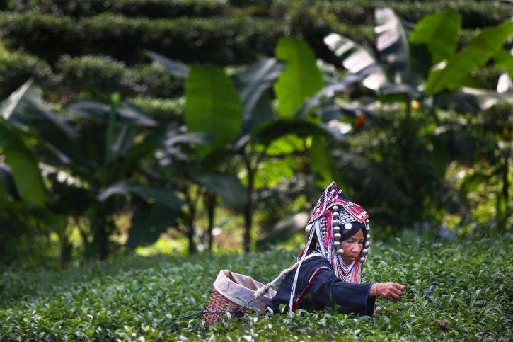 working women Thailand