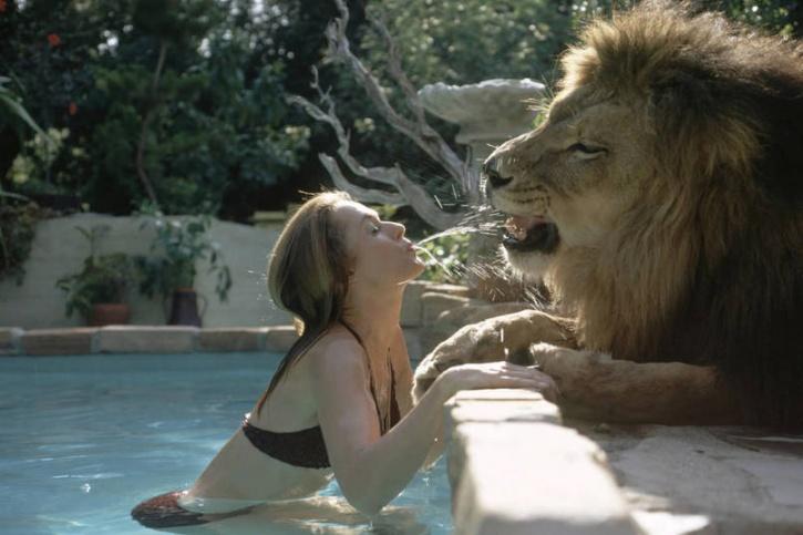 Neil, the Lion