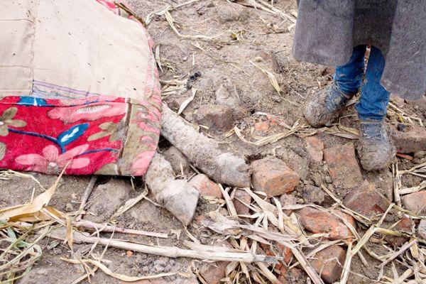 Injured horse at Kashmir floods