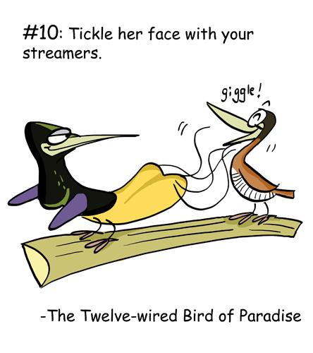The twelve-wired bird of paradise