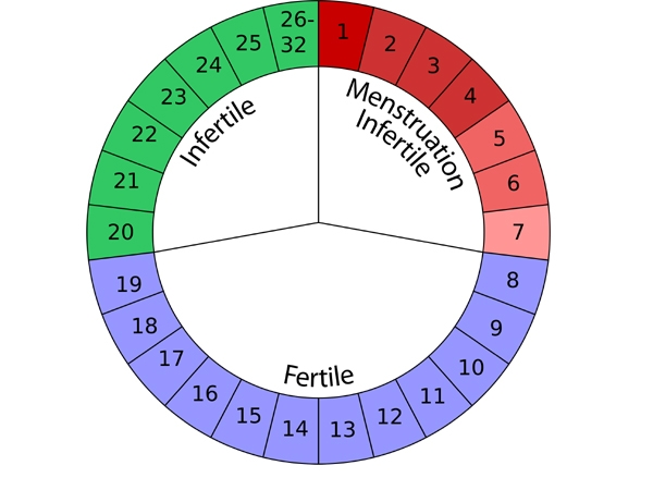When Are Women Most Fertile To Get Pregnant?