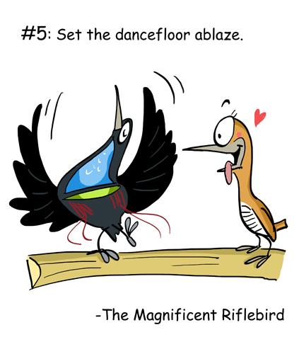 The Magnificent Riflebird