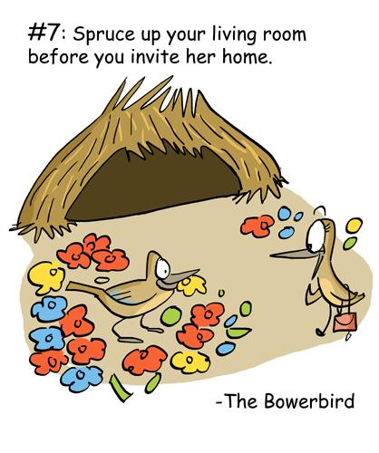 The Bowerbird