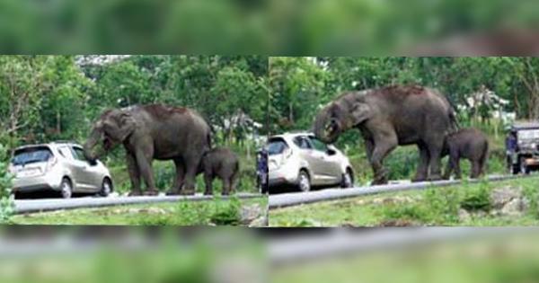 elephant selfie fail