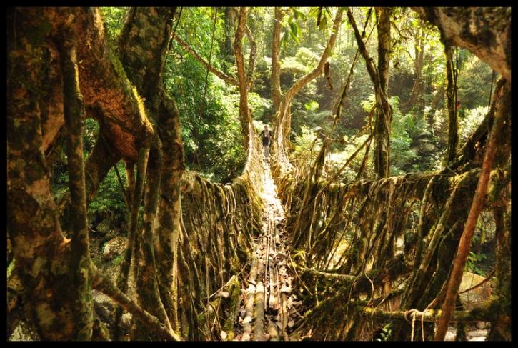 cherrapunji root bridge