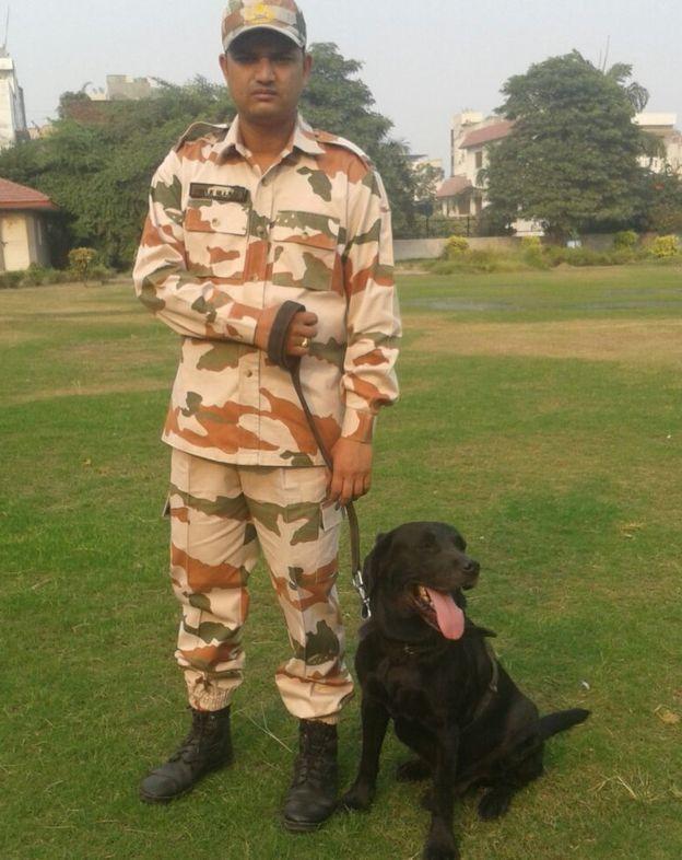 rex dog india k9 security