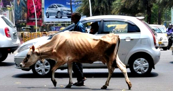Why kills muslims over beef