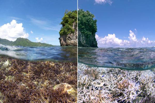 global coral bleaching