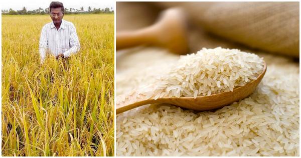 Diabetes rice