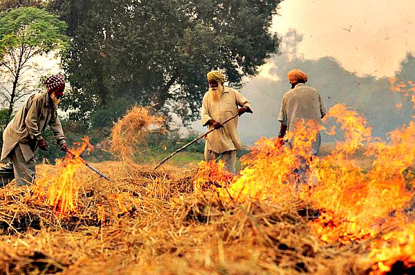 paddy fire punjab