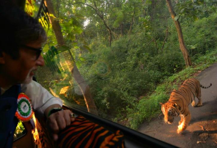Amitabh Bachchan-Tiger