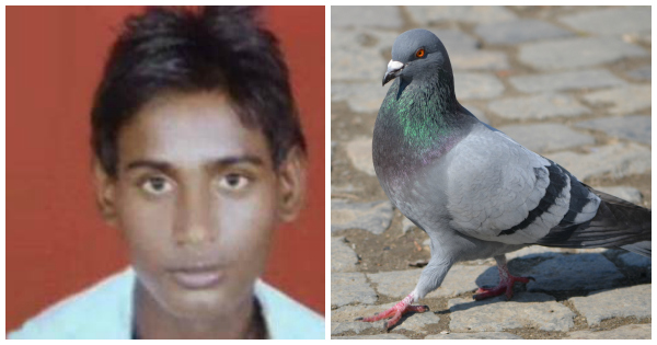 Dalit pigeon death