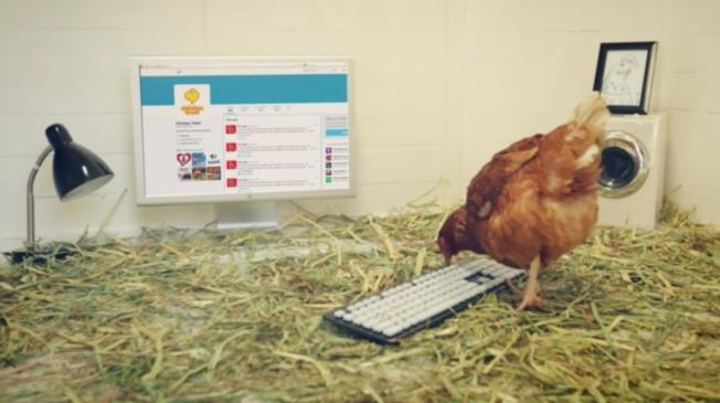 Chicken Tweet