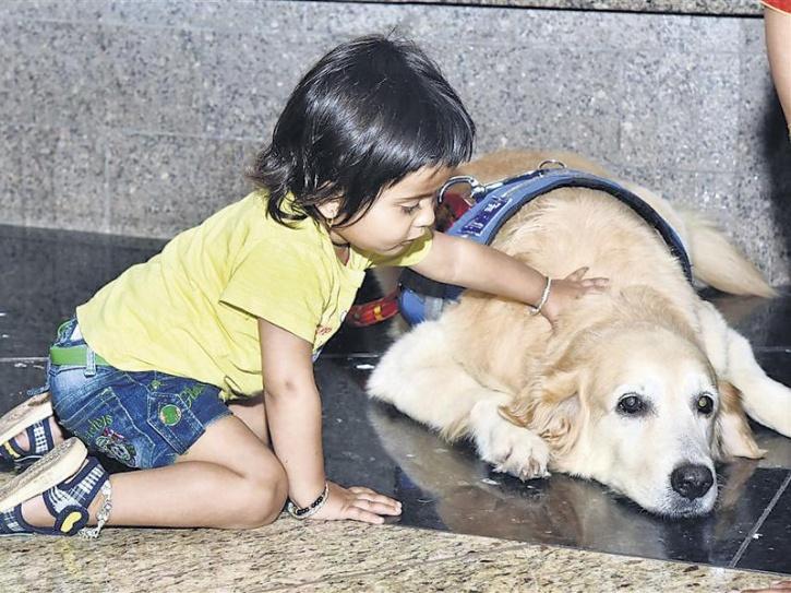 therapy dogs mumbai airport 2