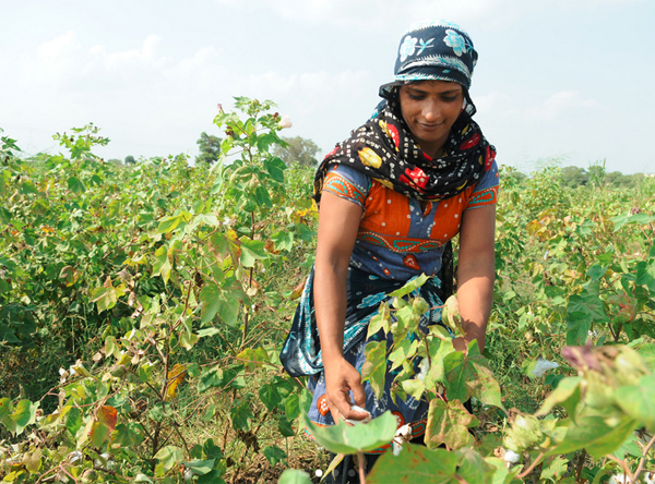 Neetu working in the farm