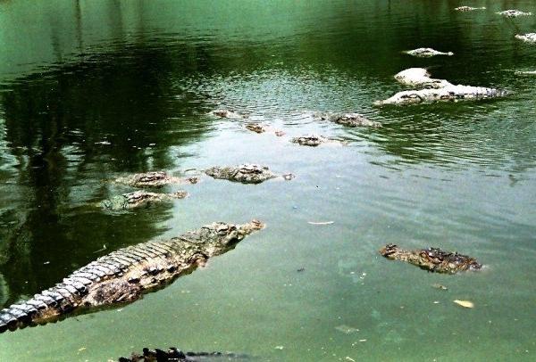 crocodile shrine pakistan