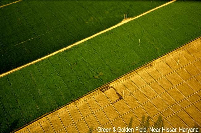 Green and Golden Fields