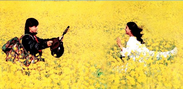 DDLJ saffron fields