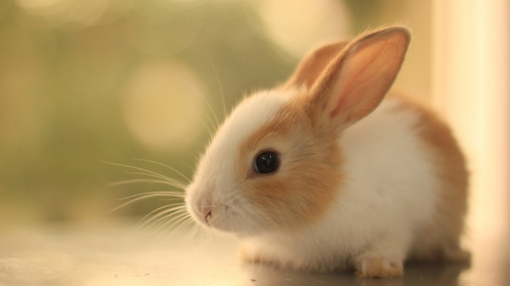 Animal testing banned in India