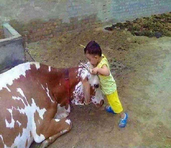 bull kid