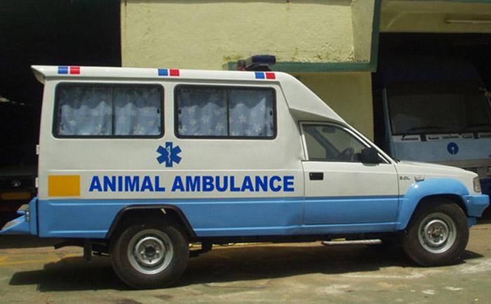Free Ambulance Service For Animals In Navi Mumbai