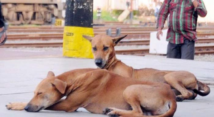 After Attack On Police Horse, Now Another Chhattisgarh BJP Leader Arrested For Shooting Dead Street Dogs
