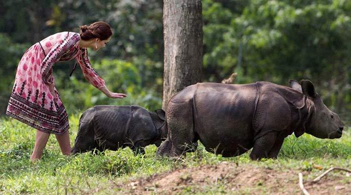 Kaziranga rhino killed during royal couple tour