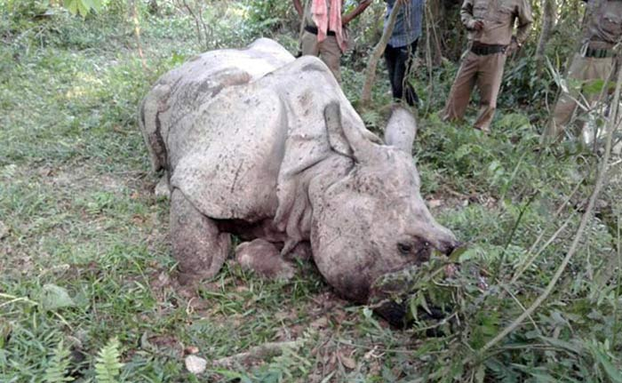 Railway Constable Among 3 Arrested With Rhino Horn In Assam