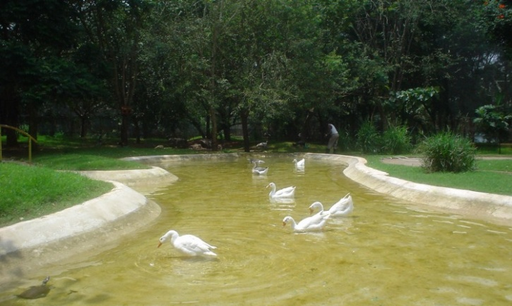 Bird sanctuary at Karanji lake, Mysuru Zoo