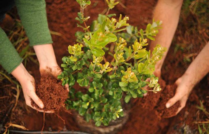 priyanka bhadoriya lets plant trees