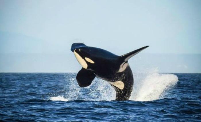 Granny Whale