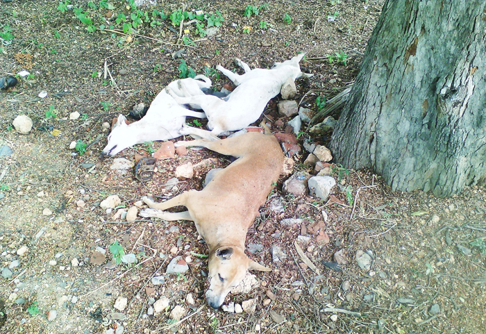 3 Dogs Found Shot Dead In Hyderabad