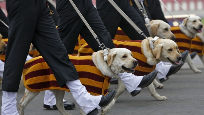 Valiant dog Mansi, handler awarded for fighting militancy
