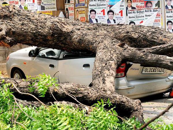 Tree_Crushes_Car