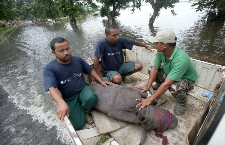 Ferrying rhino calf to hospital