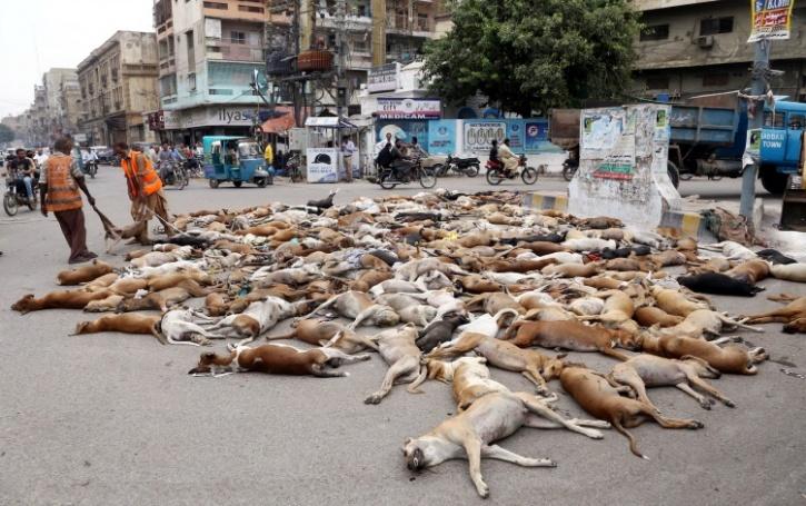Dog culling in Karachi