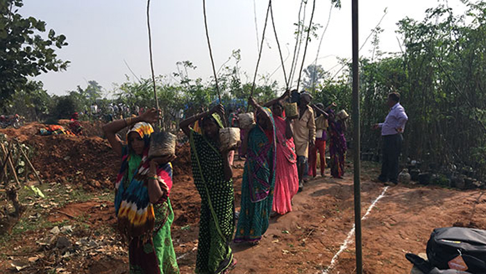 UttarPradesh Plantation